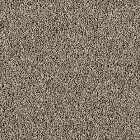 705/Penthouse-Carpets/Shoreline-Carpet