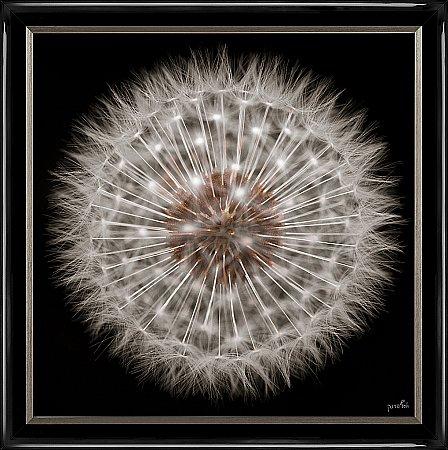13939/Artko/Dandelion-Clock-Framed